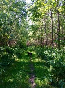 8 woods